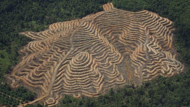 Plantation de palmiers à huile à Bornéo. [RTS]