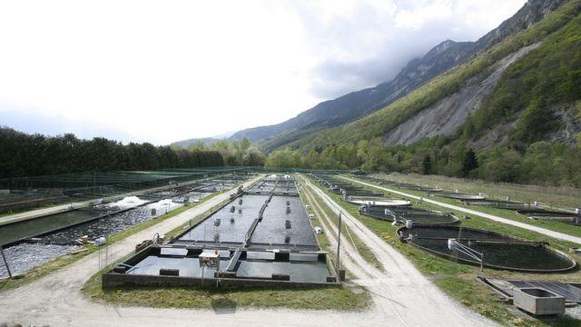 La pisciculture de Vionnaz alimentée en eau de source. [Pisciculture de Vionnaz]