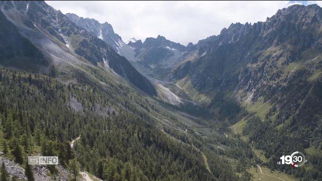 Les forêts subissent les conséquences des changements climatiques [RTS]