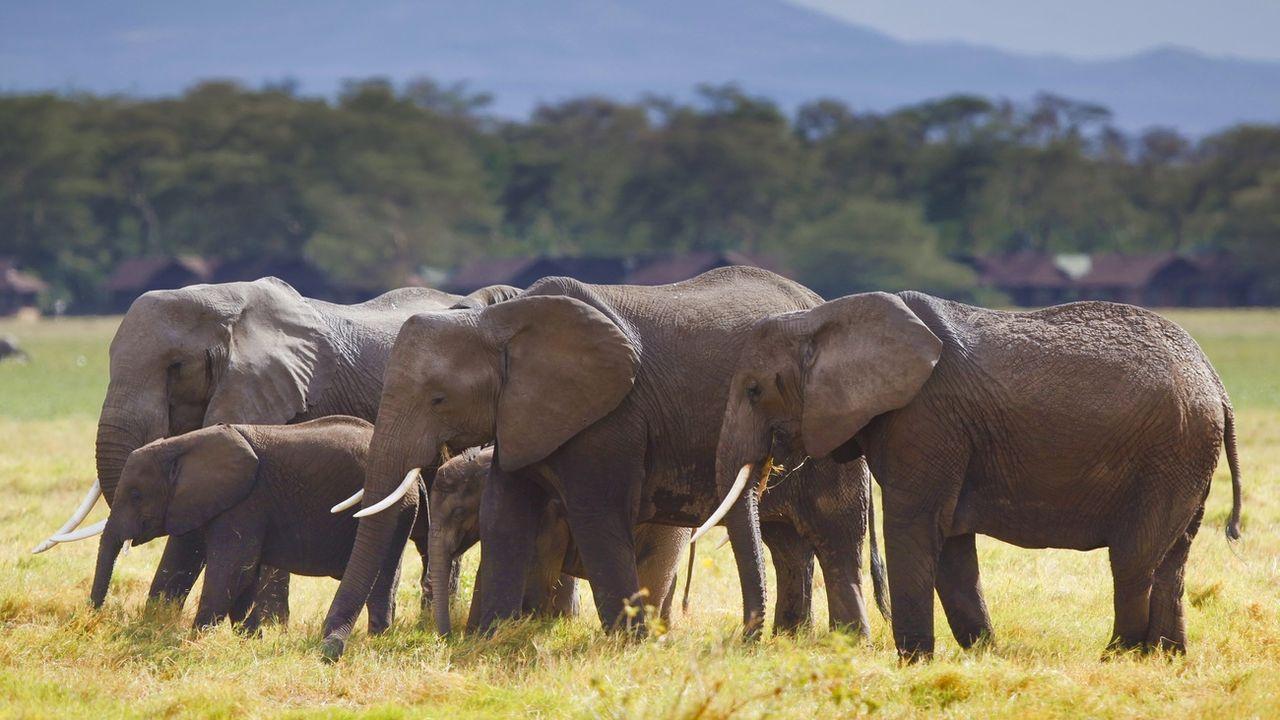 Des éléphants du parc national Amboseli, au Kenya. [DAI KUROKAWA - keystone]