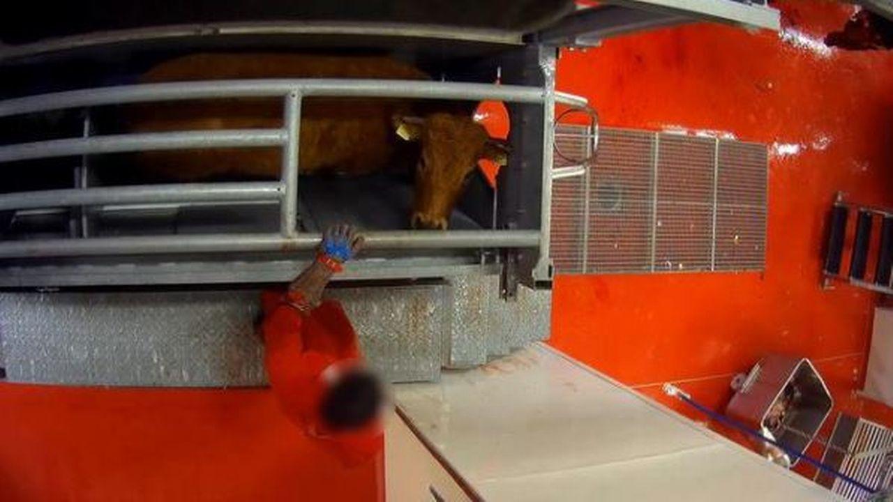 Une image de l'abattoir des Ponts-de-Martel publiée par l'association PEA. [Association Pour l'Egalité Animale]