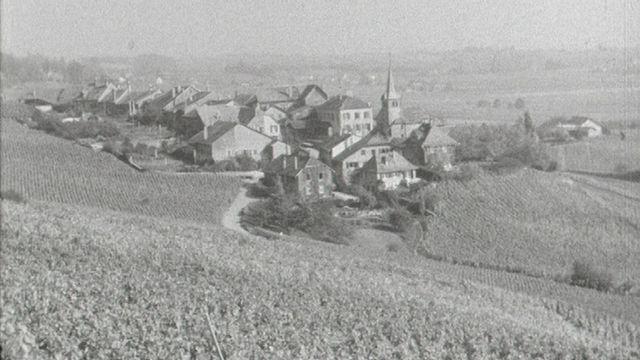 La route du vignoble [RTS]