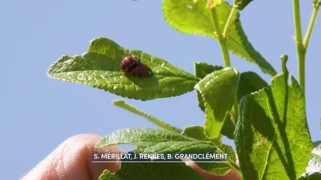 Les insectes sont nos amis et contribuent à la biodiversité [RTS]