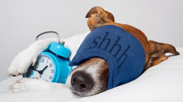 Les animaux ont leur propres pratiques en matière de sommeil. damedeeso Depositphotos [damedeeso - Depositphotos]