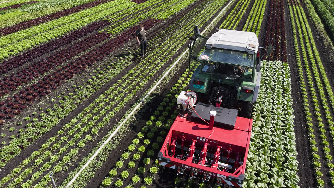 Les pesticides sont de moins en moins utilisés en Suisse. [Anthony Anex - KEYSTONE]