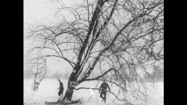Massacre à la tronçonneuse: 1 million d'arbres fruitiers abattus en Thurgovie entre 1950 et 1970. [RTS]