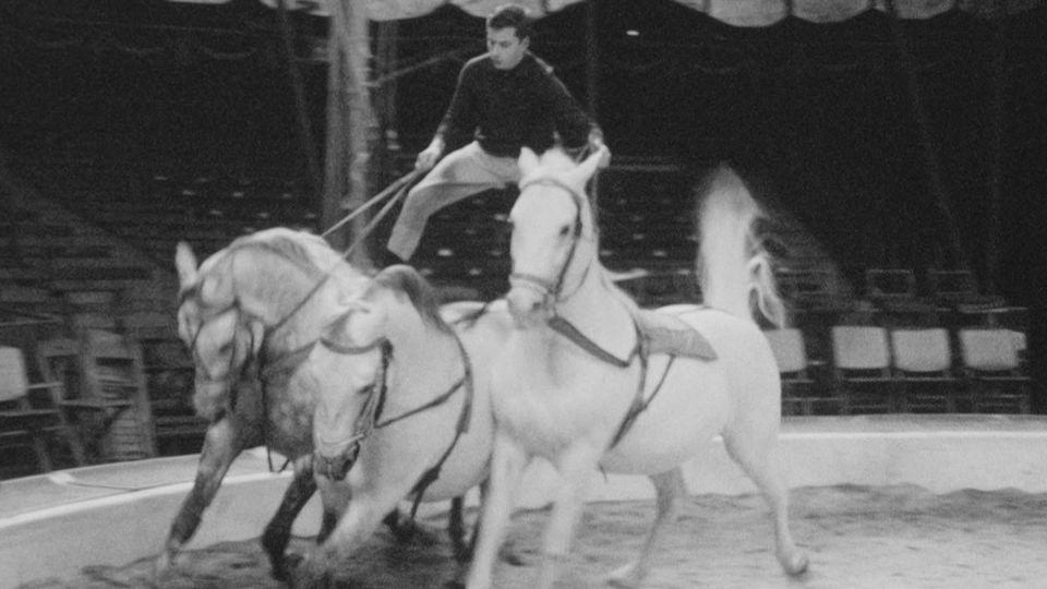 La famille Knie s'est illustrée dans le dressage des chevaux. [RTS - RTS]