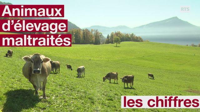 Des centaines d'animaux sont maltraités par leurs éleveurs en Suisse [RTS]