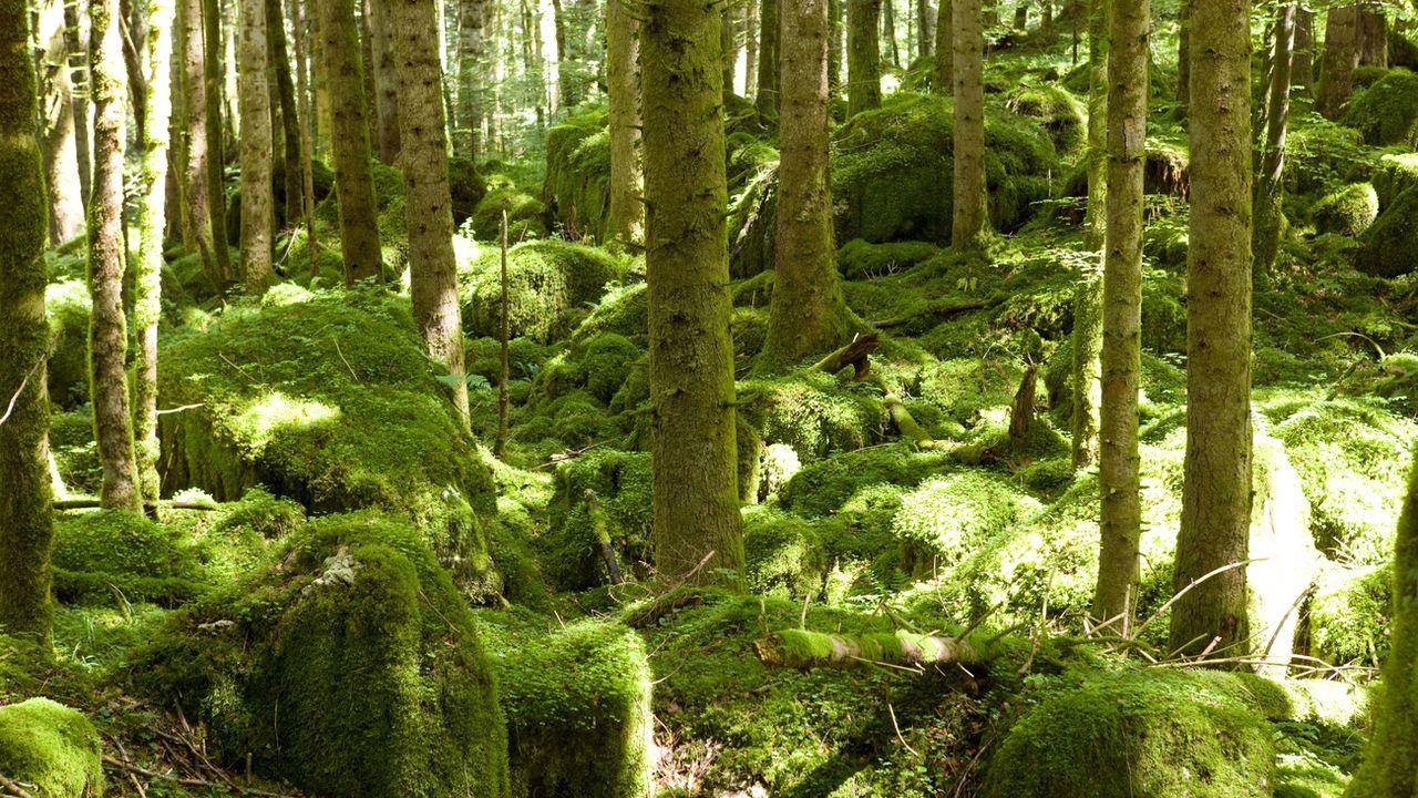 Une forêt près du Doubs, dans le canton du Jura (image d'illustration). [Martin Ruetschi - Keystone]
