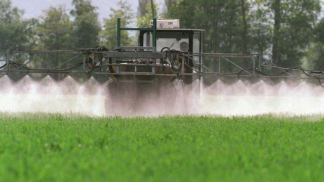 Disparition des insectes, faut-il interdire les pesticides? [Arno Balzarini - Keystone]