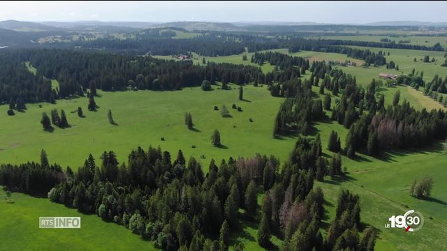 Les forêts suisses souffrent du réchauffement climatique. Des mesures particulières ont été prises dans le Jura [RTS]