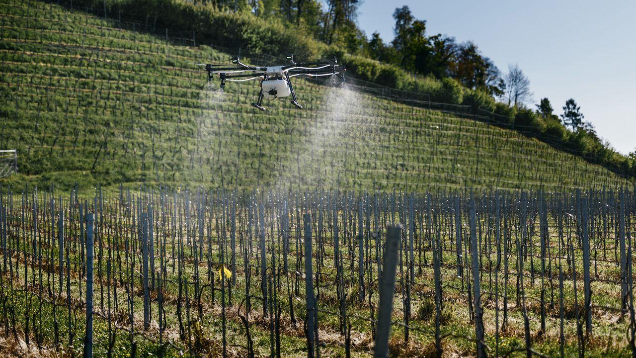 Drone d'épandage dans une vigne près de Rapperswil en 2017. [Christian Beutler - Keystone]