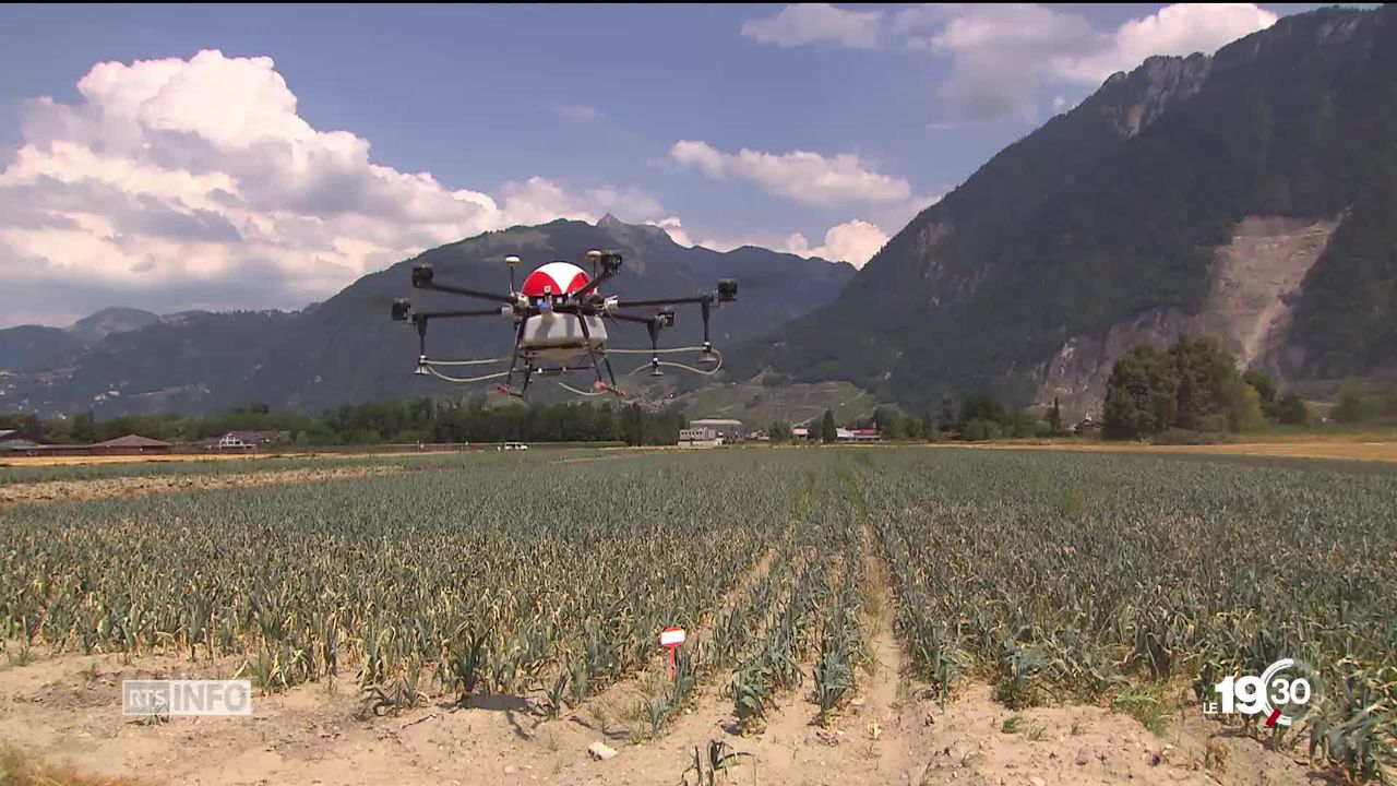 La Suisse est le premier pays d'Europe à autoriser les drones pulvérisateurs dans l'agriculture [RTS]