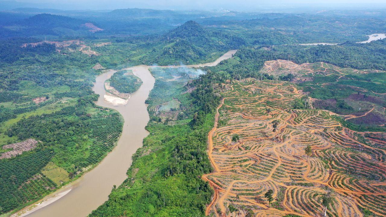 Déforestation à Aceh, en Indonésie, pour planter des palmiers à huile. [Hotli Simanjuntak - EPA/Keystone]