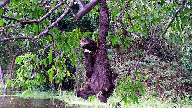 Le rêve des chercheurs est d'observer la biodiversité de toute la forêt. [Olivier Angehrn - RTS]