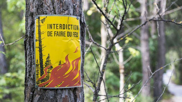 L'ensemble des forêts du pied du Jura, du canton de Vaud à Bâle, sont touchées par la sécheresse. [Dominic Steinmann - Keystone]