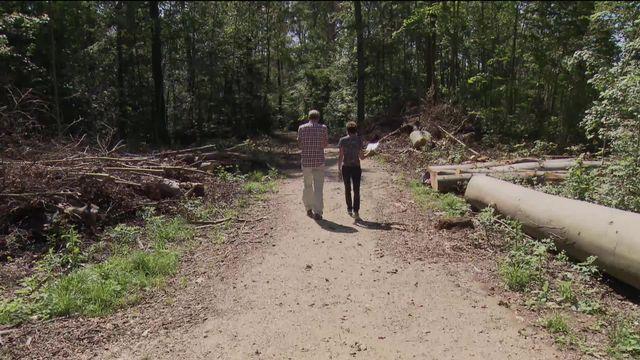 La canicule tue nos forêts [RTS]