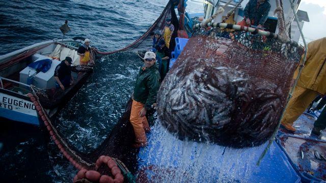Des pêcheurs de sardines en action. [Nacho Doce - Keystone]