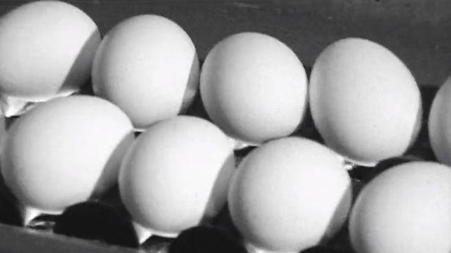 Les oeufs dan la chaîne de production industrielle, 1970. [RTS]