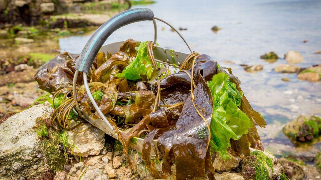 Des algues en Bretagne. [Garo/Phanie - AFP]