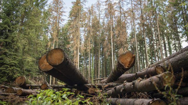 Potentiel inexploité de bois-énergie dans les forêts fribourgeoises (image prétexte). [Urs Flueeler - Keystone]