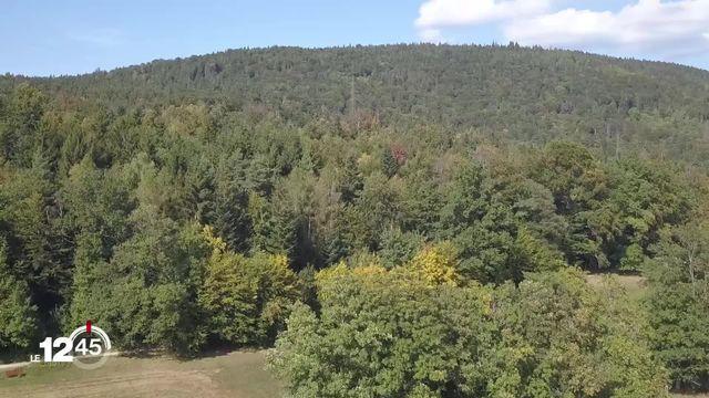 La ville de Neuchâtel, propriétaire de 1'500 hectares de forêt, présente une stratégie pour faire face au dépérissement. [RTS]