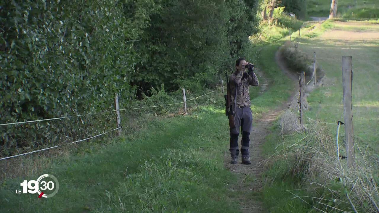 Vaud: les effectifs de chasseurs sont trop faibles avec des conséquences sur la régulation de la faune [RTS]
