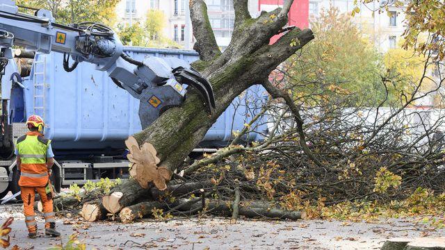 L'abattage de 34 arbres malades juges dangereux a debute, ce jeudi 27 octobre 2016 sur la plaine de Plainpalais a Geneve. L'operation, qui doit durer jusqu'a vendredi, a ete denoncee par des opposants et defenseurs des arbres. L'autorisation des travaux a ete delivree mercredi par le canton. Ils sont realises par une entreprise specialisee zurichoise. Des arbres qui representent un danger, on n'avait pas d'autres choix que de securiser l'espace public. Une poignee d'opposants a l'abattage des arbres ont ete signales sur les lieux. (KEYSTONE/Martial Trezzini)  [Martial Trezzini - Keystone]