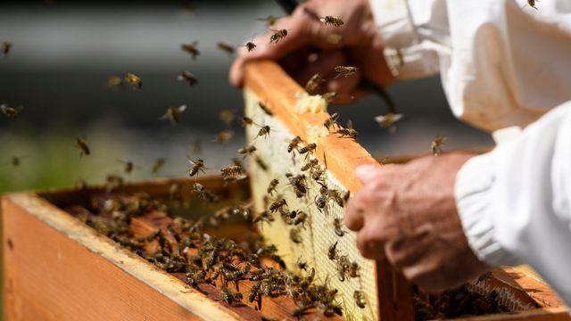 Un apiculteur travaille sur des ruches à Lausanne. [Laurent Gillieron - Keystone]