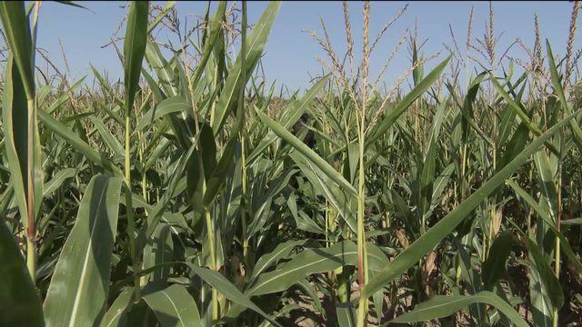 Les ventes de produits bio ont doublé en 10 ans. Les agriculteurs se convertissent en masse grâce aux nouvelles technologies. [RTS]