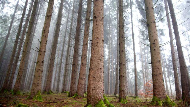 Forêts suisses, la gueule de bois ? [CHRISTIN Philippe - RTS]