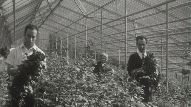Etre horticulteur [RTS]
