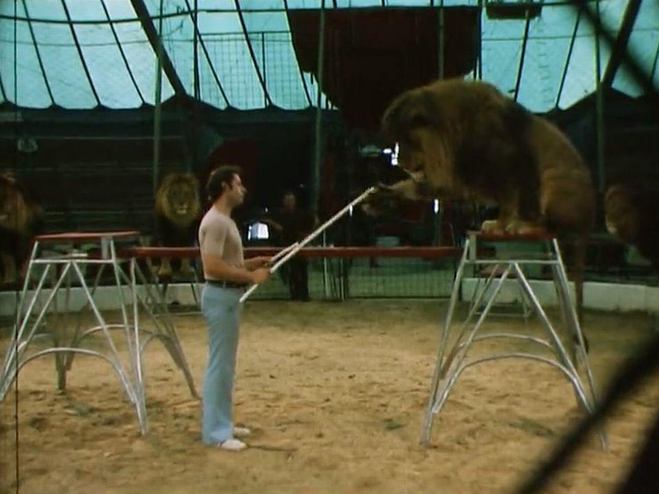 Vingt-quatre heures dans la vie d'un dompteur de fauve du cirque Knie. [RTS]