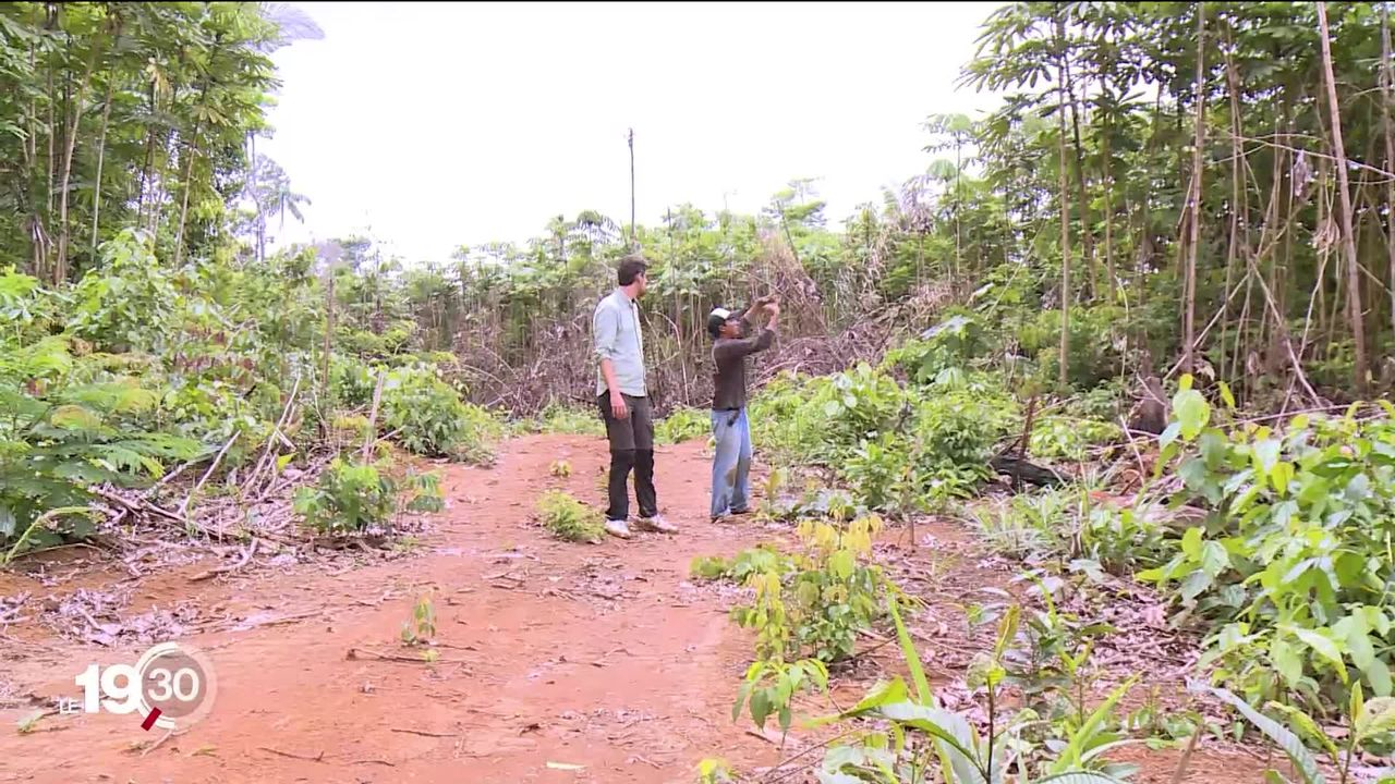 Brésil: les tribus indiennes sont menacées par les trafiquants de bois [RTS]