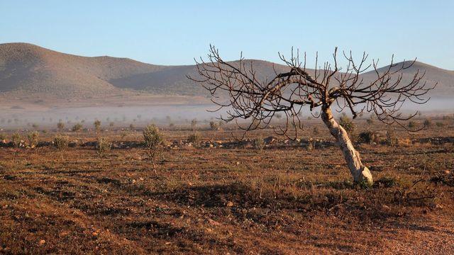 Un arbre mort dans le sud de l?Espagne. [Manuel Cohen - AFP]