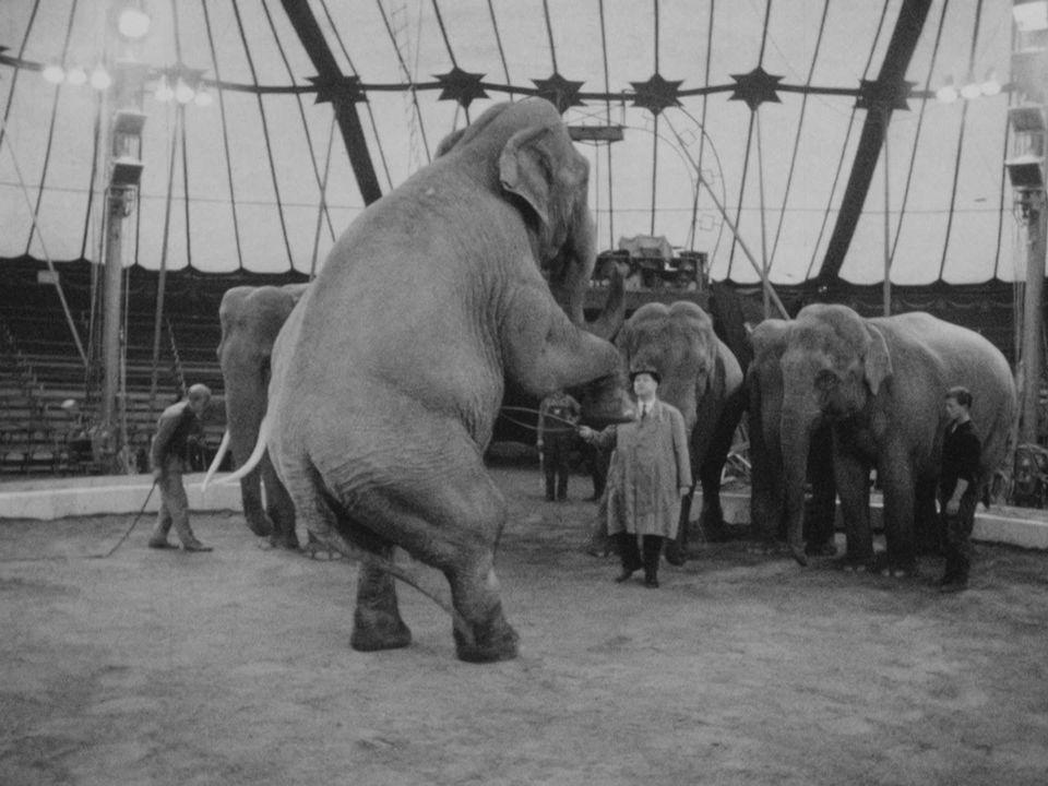 Les éléphants du Knie [RTS]