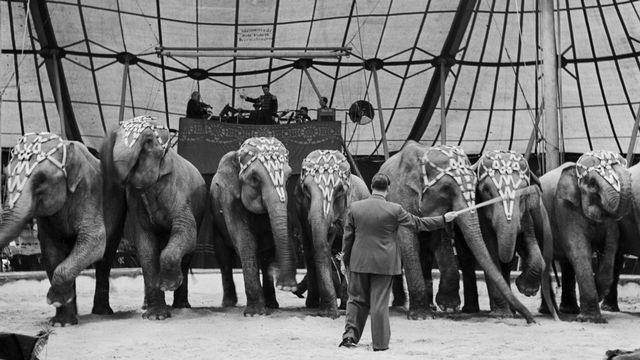 Rolf Knie senior fuehrt im April 1944 in der Manege des Circus Knie eine Nummer mit Elefanten auf. Aufgenommen in der Schweiz. (KEYSTONE/PHOTOPRESS-ARCHIV/Walter Studer) [Walter Studer - Keystone]