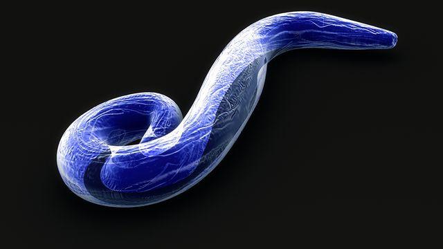 Plasmodium falciparum est une des espèces de Plasmodium, des parasites qui causent le paludisme chez l'être humain. sciencepics Depositphotos [sciencepics - Depositphotos]