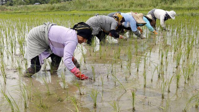 Il faut 2500 litres d'eau pour produire un kilo de riz. [Abedin Taherkenareh - EPA/Keyston]