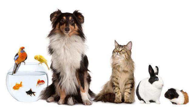 La détention des animaux de compagnie est régie par la loi. [lifeonwhite - Depositphotos]