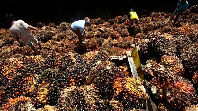 La production d'huile de palme entraîne déplacements de populations et destruction de forêts, selon les ONG Pain pour le Prochain et Action de Carême. [Tatan Syuflana - AP/Keystone]