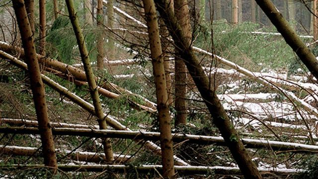 """Lothar avait """"couché"""" près de 13 millions de m3 de bois en 1999 [Lukas Lehmann - Keystone]"""