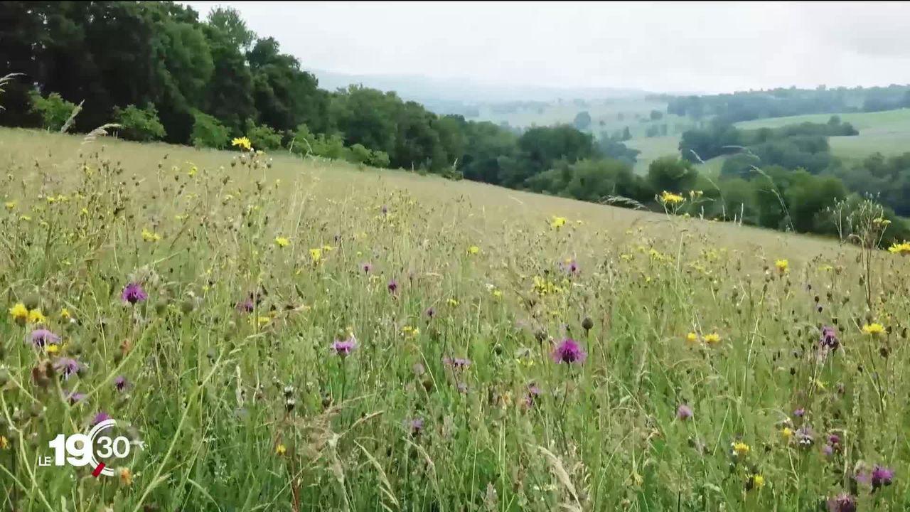 La Suisse est particulièrement touchée par la crise de la biodiversité selon un rapport du WWF [RTS]