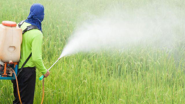 Les pesticides sur le site de l'Organisation Mondiale de la Santé (OMS) [comzeal - depositphotos]