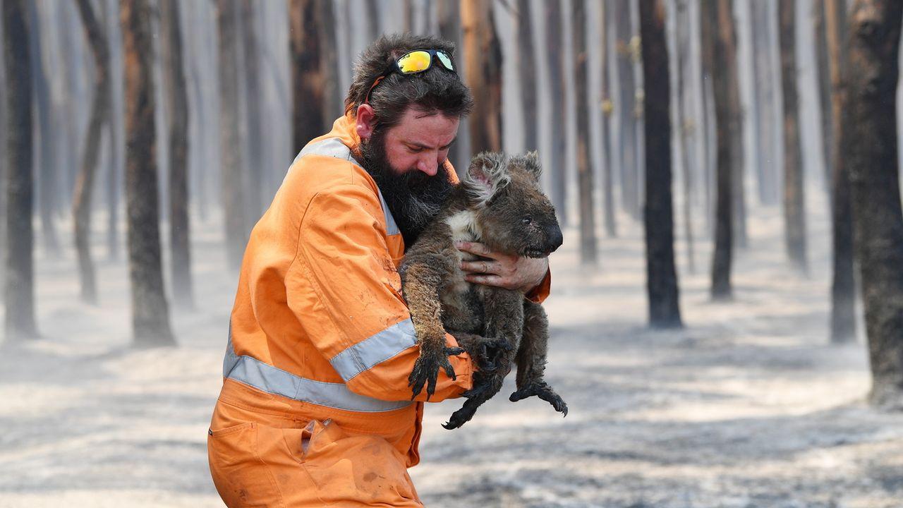 Un sauveteur tient un koala rescapé d'un feu de forêt sur l'île Kangaroo en Australie. [David Mariuz - EPA]