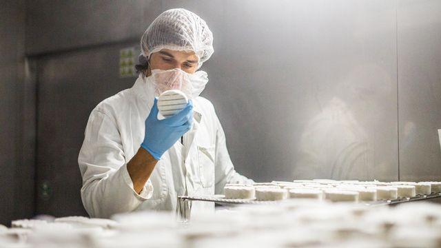 Production de fromages végans chez New Roots. [New Roots]