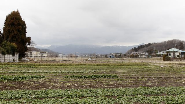 Une plantation d'épinards contaminée en 2011 dans la préfecture de Fukushima. Ken SHIMIZU AFP [Ken SHIMIZU - AFP]