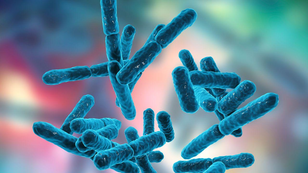 Image de synthèse de bactéries anaérobies, capables de vivre en l'absence d'oxygène. [Kateryna Kon - AFP]