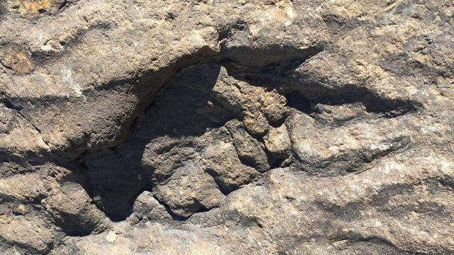 Une des empreintes d'Isochirotherium herculis, sur la piste de La Veudale, en Valais. [A. Muller - Muséum d'histoire naturelle de Genève]