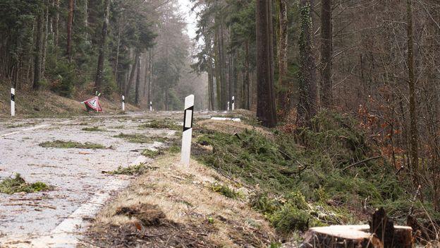 La forêt fribourgeoise endommagée par les tempêtes de début février